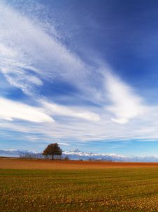 Free Meadow With Isolated Tree Stock Photo - 4125980