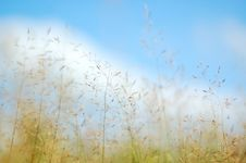 Free Blue Sky And Yellow Grass Royalty Free Stock Photos - 4126018