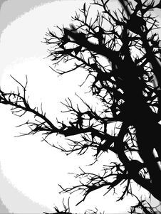 Free Black Tree/White Moon Royalty Free Stock Photos - 4126108