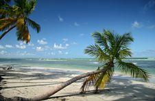 Free Caribbean Beach Royalty Free Stock Photography - 4127857