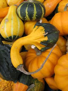 Free Pumpkins Royalty Free Stock Images - 4129429
