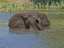 Free Elephant Swim Stock Photos - 4130583