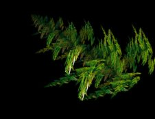 Free Fractal Fern Leaf Stock Photo - 4131900