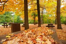 Free Maple Leaf Picnic Stock Photography - 4133912
