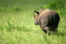 Free White Rhinoceros Stock Images - 4134094