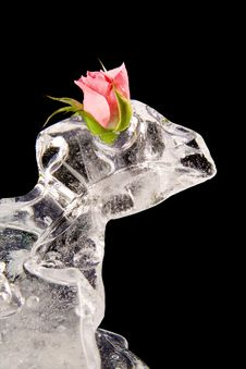 Free Chilled Rose In The Ice Stock Photography - 4134532