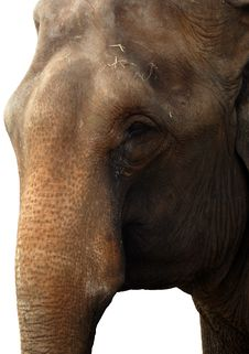 Free Elephant Face Isolated Stock Photography - 4134602