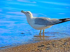 Free Seagull At The Beach Stock Images - 4134614