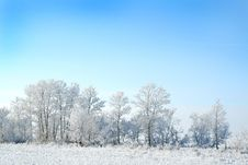 Free White Winter Stock Photography - 4134662