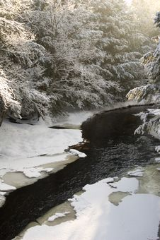 Snow Covered Creek In Pine Forest Stock Photography