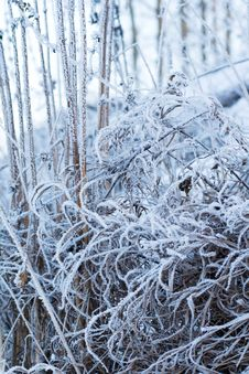 Free Frozen Grass Royalty Free Stock Photo - 4135285