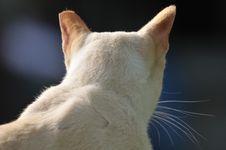 Free Cat Royalty Free Stock Photo - 4135395