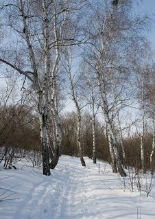 Free Ski Run Royalty Free Stock Image - 4135646