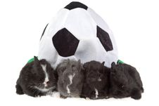 Four Bunny And A Soccer Hat Royalty Free Stock Image