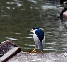 Free Bird Stock Photography - 4136662