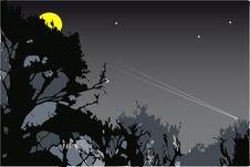 Free Moon Trees Royalty Free Stock Photo - 4136815