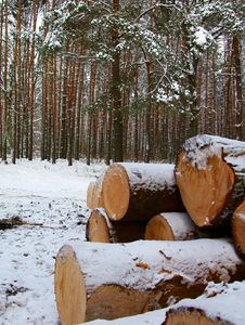 Free Tree Felling Royalty Free Stock Photo - 4138025