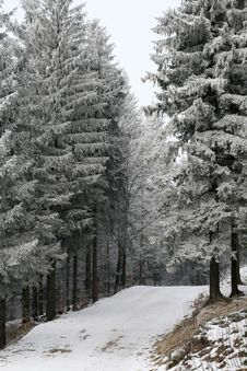 Free Winter Forest Scene Royalty Free Stock Photos - 4138838