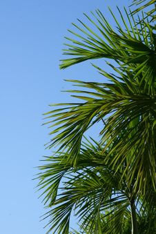 Free Palm Trees Royalty Free Stock Photos - 4139218
