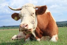 Free Close-up From A Cow. Stock Photo - 4139990