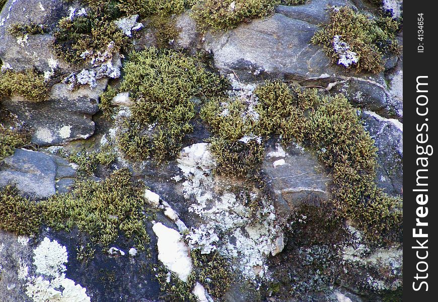 Moss And Snow On Rock