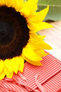 Free Sunflower And A Red Box Royalty Free Stock Photos - 4140998