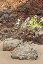 Free Coastal Rock Royalty Free Stock Photo - 4141055