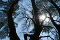Free Sunbeam Through Branches Royalty Free Stock Image - 4141966