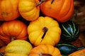 Free Colourful Autumn Display Stock Photography - 4147282