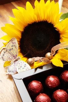 Free Sunflower, Butterfly And Chocolate Balls Royalty Free Stock Photos - 4140908