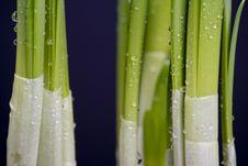 Free Fresh Spring Stock Image - 4141361