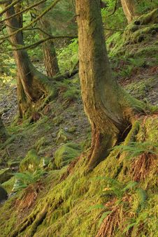 Free Columbia Gorge Forest Royalty Free Stock Photography - 4142227