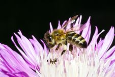 Free Bee Stock Images - 4142374
