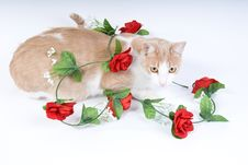 Free Tabby Cat With Roses Stock Images - 4143384