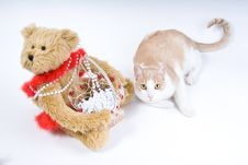Free Teddy Bear And Tabby Cat Stock Photos - 4143403