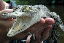 Free Close Up Croc Stock Photography - 4146322