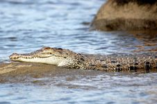 Free Croc On A Rock Royalty Free Stock Photography - 4146927