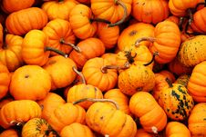 Free Ornamental Pumpkins Royalty Free Stock Images - 4147259