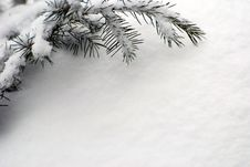 Free Snow Covered Branch Stock Images - 4147324