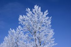 Free Frozen Trees Stock Image - 4147761