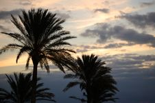 Free Palm Trees On Sunset Royalty Free Stock Image - 4148136