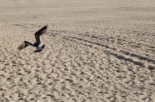 Free Seagull Flying On Beach Stock Photography - 4148482