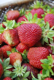 Free Strawberries Royalty Free Stock Images - 4149729