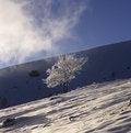 Free Frozen Tree Stock Photo - 4151410