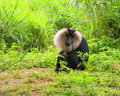 Free Baboon Stock Images - 4158704