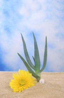 Free Aloe Plant Stock Photo - 4153280