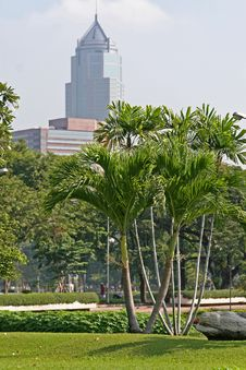 Free Lush Tropical Park, Bangkok Stock Image - 4153811
