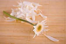 Free Loves Me, Loves Me Not Daisy On Bamboo Mat Royalty Free Stock Photos - 4154388