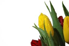 Free Yellow Tulips Stock Photo - 4156950
