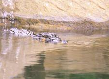 Free Crocodile Royalty Free Stock Photography - 4158557
